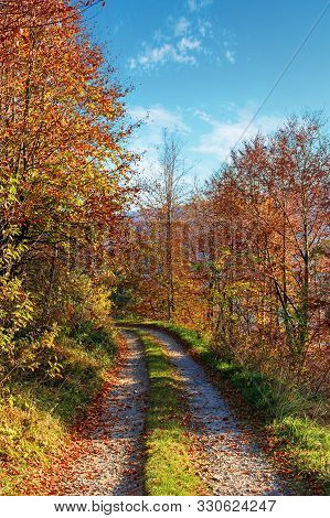 Country Road Through Forest In Autumn. Beautiful Dry October Weather On A Sunny Morning. Trees In Fa