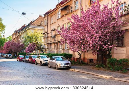 Uzhgorod, Ukraine - 19 Apr, 2019: Streets Of Uzhgorod In Sakura Blossom. Beautiful Scenery In Evenin