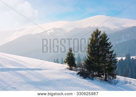 Spruce Tree On The Snow Covered Slope.  Beautiful Mountain Landscape In Winter. Misty Afternoon Weat
