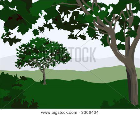 Enchanted Landscape