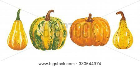 Watercolor Hand Drawn Set Of Autumn Pumpkins. Bright And Colorful Farm Elements. A Beautiful Collect