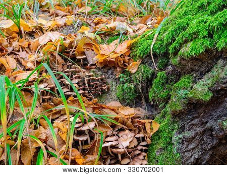 Tree With Moss On Roots In A Green Forest Or Moss On Tree Trunk. Tree Bark With Green Moss. Close-up