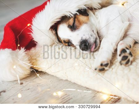 Sleeping dog in christmas hat. Puppy on pillow at home