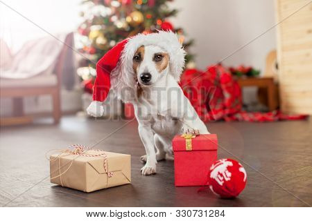 Dog near christmas tree. Pet at home, happy New Year and merry Christmas