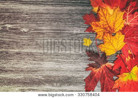 Autumn leaves background top view of old wooden rustic wood background texture and red and yellow foliage maple leaf. Fall season concept.