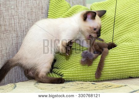 The kitten plays with a fur toy on the pillow. poster