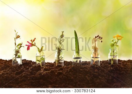 Bottles With Essence Liquid And Plants Inside On Soil And Green Nature Background. Alternative Natur