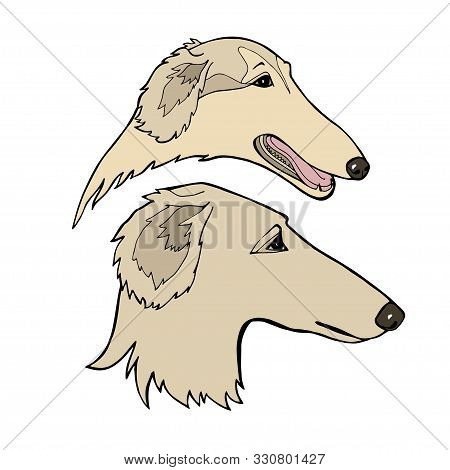 Russian Borzoi. Hunting Breed Dogs. Vector Illustration. Vector Logo Pure-bred