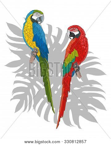 A Pair Of Exotic Macaw Parrots. Exotic Birds. Blue-yellow And Red-green Parrots. Postcard, Poster.
