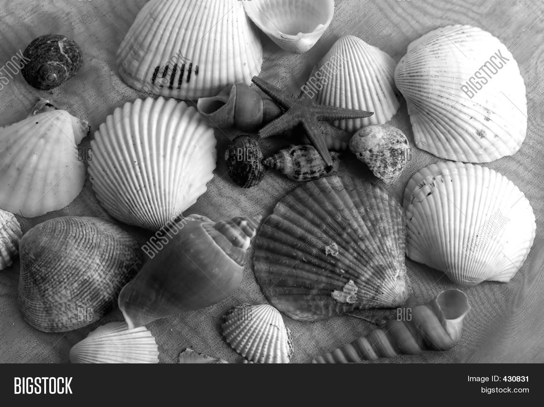 Black white shells image photo free trial bigstock