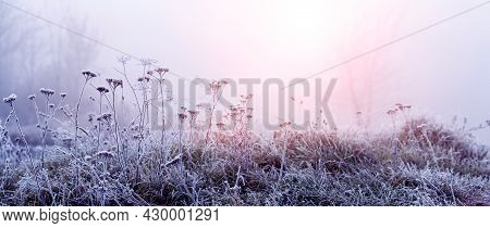 Morning Fog In Winter. Thickets Of Frost-covered Dry Plants In The Morning Mist During Sunrise