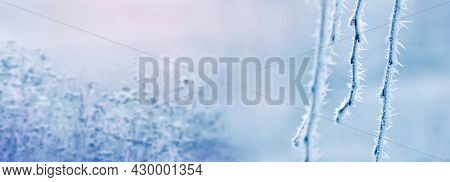 Covered With Thick Frost Drooping Tree Branches In The Fog On A Blurred Background On A Winter Morni