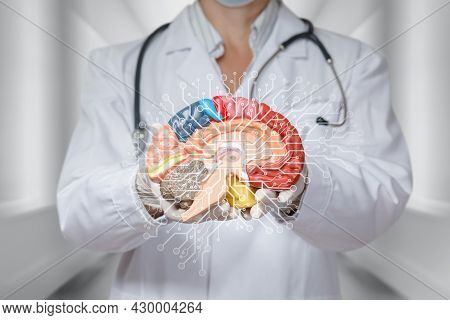 Concept Of Brain Function Research Using Artificial Intelligence. The Doctor Holds The Brain On A Bl