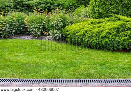 Evergreen Bush Of Thuja And Roses In A Backyard Flower Bed, Landscaping With Grate Drainage System O