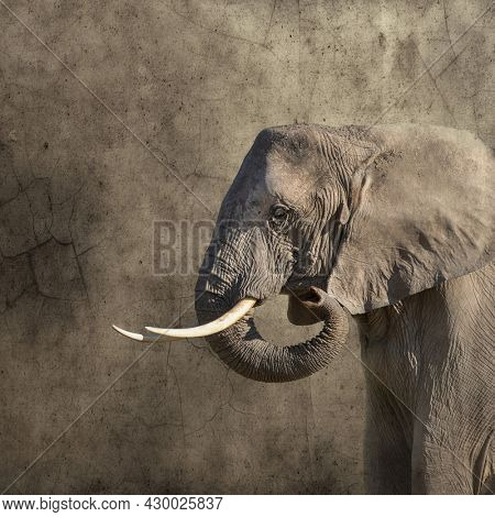 African elephant, loxodonta africana, monochrome side view against textured background. Retro style with space for text.