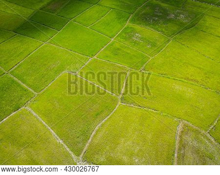Aerial View Of The Green Rice Fields Nature Agricultural Farm Background, Top View Rice Field From A