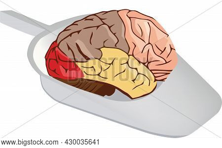 Human Brain Human Brain Organ In Hospital Sanitary Pan