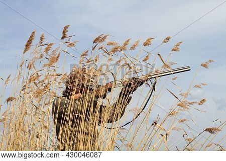 In Late Autumn, The Grass On The Lake Shore Turned Yellow. A Duck Hunter Stands Behind A Thicket Of