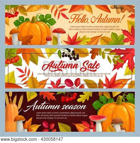 Hello Autumn And Fall Seasonal Sale Vector Banners With Fallen Leaves And Mushrooms. Maple, Oak, Che
