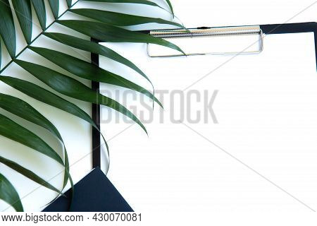 Black Clipboard With Blank Paper, Golden And Evergreen Plant Clip With Copy Space. Close Up