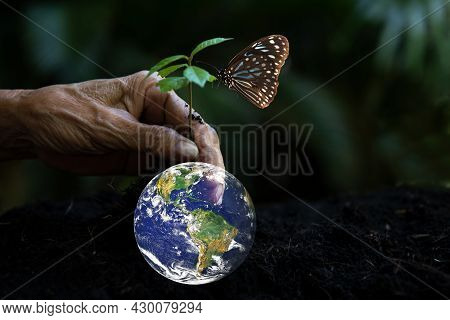 Hand Old Holding And Protecting, Sapling Plant Tree For Save Earth Globe On Soil.   World Environmen