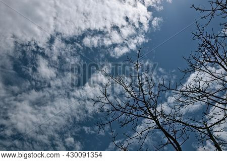Leafless Trees Occur Naturally. The Background Is A Blue Sky And A Lot Of White Clouds.