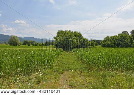 The Early July Landscape Close To The North East Italian Village Of Ziracco In Friuli-venezia Giulia