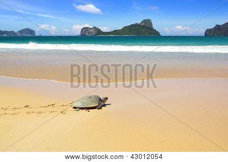 Sea turtle on a beach.