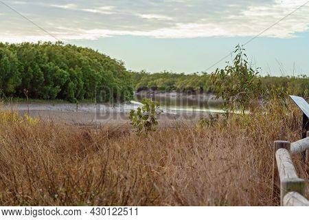 Small Trees Growing Amongst Dry Grass On A Creek Bank In Rural Australia. Grass Intentionally Blurre