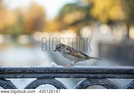 Photo Where There Is A Little Bird Eating Bread Crumbs On A Rack, Close Up View