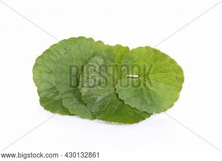 Top View Of Centella Asiatica Isolated On White Background.