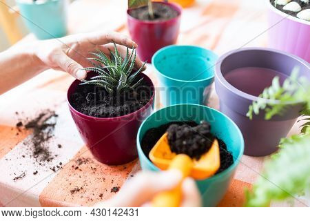 The Girl Is Replanting Flowers At Home In New Pots. Plants And Flowers Care. Flower Shop.