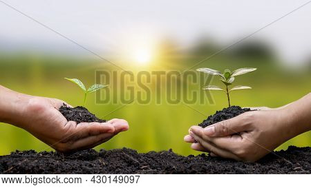 Human Hands Help Plant Saplings Or Trees In The Soil In The Concept Of Earth Day And Campaign To Red
