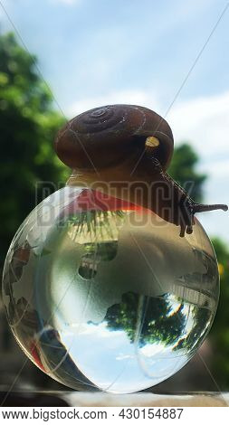 A Snail On A Globe, A Conceptual Picture That Means A Slower Spinning World.life In The New World Th