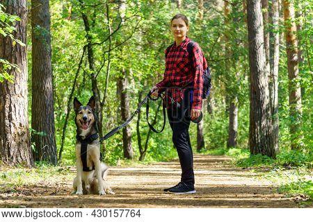 A Girl Walks With A Dog Warm Day, A Pleasant Walk Through The Forest.