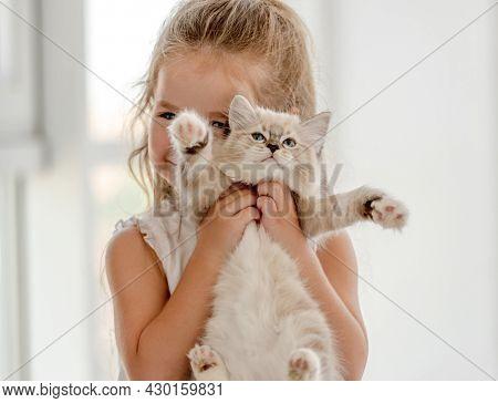 Little child girl holding ragdoll kitten. Pretty female kid with feline domestic kitty pet at home