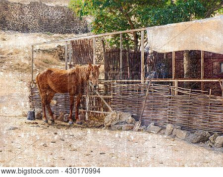 A Brown Horse Without Saddle Or Bridle. Adult Stallion In Front Of A Wooden Wicker Fence. The Animal