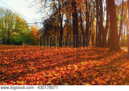 Autumn park landscape, autumn city park, orange fallen leaves on the foreground. Diffusion filter applied. Autumn park alley, autumn park trees in sunny weather, autumn park landscape