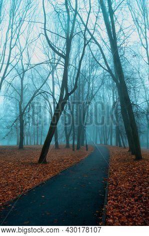 Autumn landscape, deserted autumn alley in the foggy weather. Foggy autumn park in autumn October day, autumn park landscape