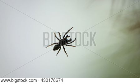 Small Spider On A Window Pane Against A Light Sky Background. Tiny Spider Insect. Isolated On Light.