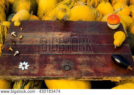 Autumn Frame Composition And Layout Made Of Colorful Pumpkins, Eggplant, Mushrooms, Seeds Aged Old R