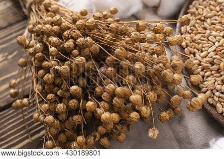 Bouquet Of Dry Flax Plants With Flax Seed Capsules On Linen Cloth. Bunch Of Dry Flax Plants On Linen