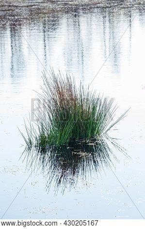 Water Landscape With Swamp In Nature Park Fochteloerveen Near Veenhuizen, Drenthe In The Netherlands