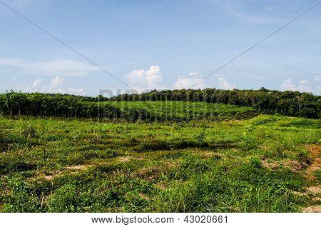 Forest @ Ko Mak Thailand