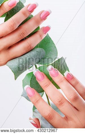 Well-groomed Female Hands With French Manicure On A Eucalyptus Background. High Quality Photo