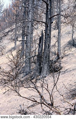 Burnt Trees Caused From A Wildfire Surrounded By Ash On A Charcoaled Landscape Taken At An Arid Moun