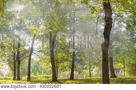 Haze Covered The Trees, Rays Of Light Make Their Way Through The Haze