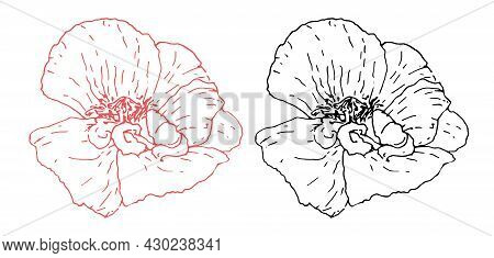 A Set Of Poppy Flowers. Vector Set Of Wild Poppy Flower Drawn In Sketch Style Isolated Black And Red