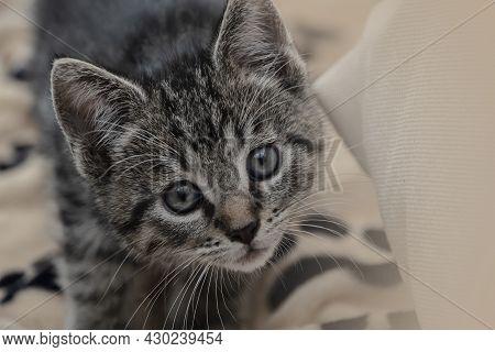 Portrait Of A Cute Tabby Kitten. Newborn Kitten, Baby Cat, Kid Animal And Cat Concept. Domestic Anim