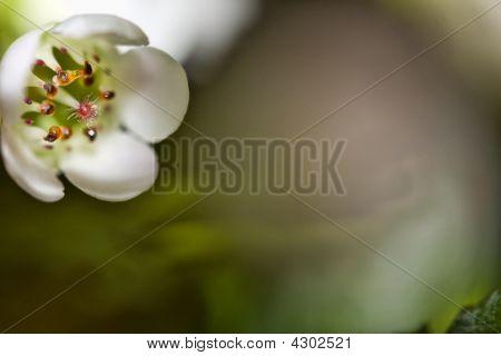 The Smalllest Flower